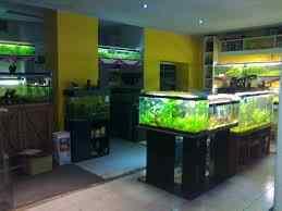 Como montar un negocio de acuario